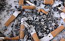 Podgląd: Usta palacza to polebitwy