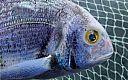 Podgląd: Prostowanie rybiego oka